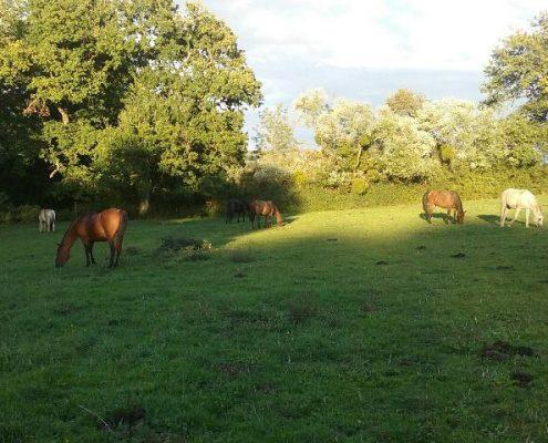gite accueil chevaux avallon